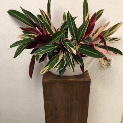 foto-plant